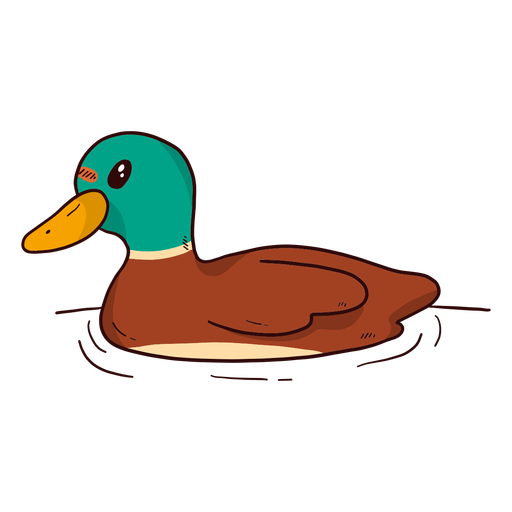 Cute drake duck wild duck beak water swimming flat Transparent PNG