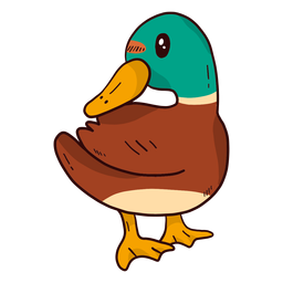 Cute drake duck wild duck beak wing flat