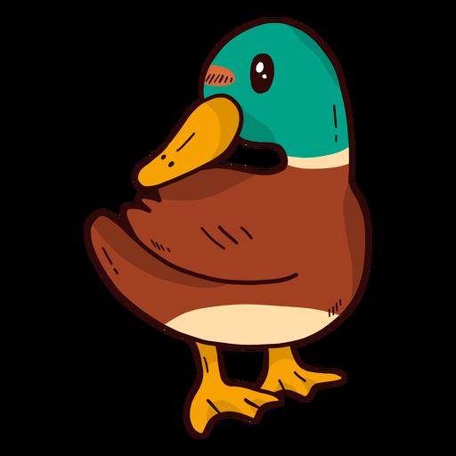 Cute drake duck wild duck beak wing flat