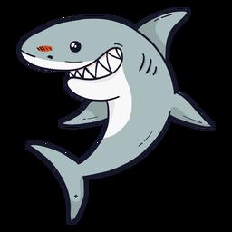 Lindo diente de cola de aleta de tiburón plano