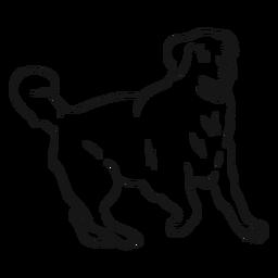 Esboço de cauda de orelha de cachorro