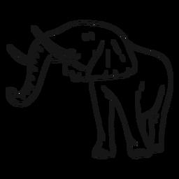 Ojo de elefante marfil tronco boceto
