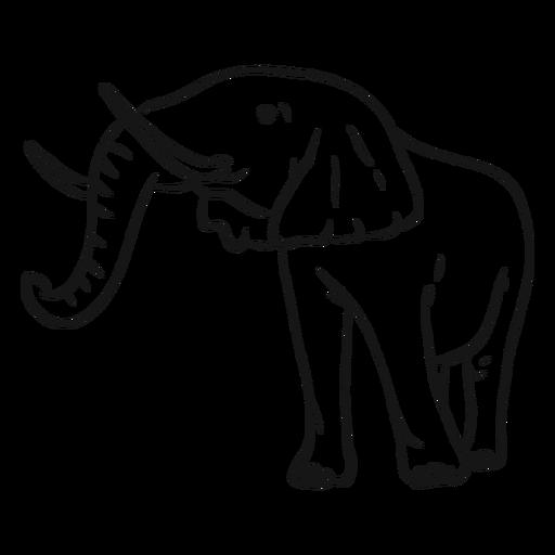 Elephant ear ivory trunk sketch