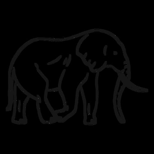 Bosquejo de cola de tronco de marfil de oreja de elefante
