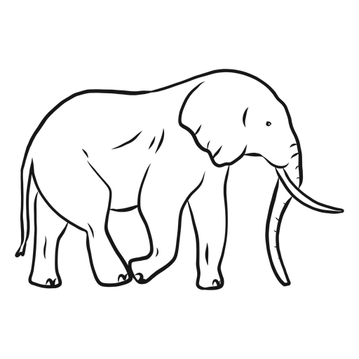 Bosquejo de elefante oreja marfil tronco cola Transparent PNG