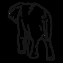 Elefantenohr-Schwanzskizze