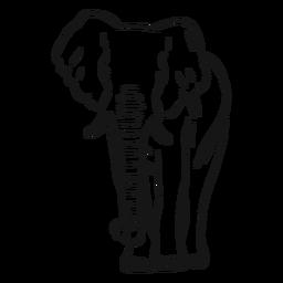 Esboço de tronco de orelha de marfim de elefante