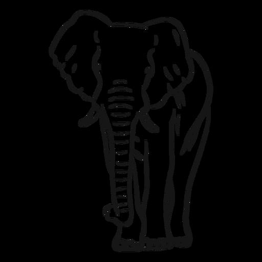 Esboço de tronco de orelha de marfim de elefante Transparent PNG