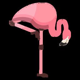 Flamingo pico rosa pierna plana