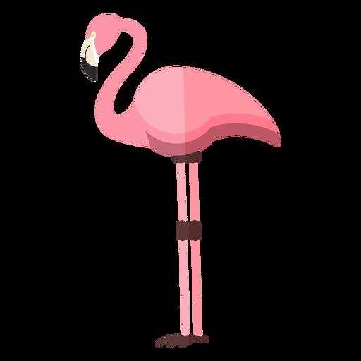 Flamingo pierna pico rosa plana