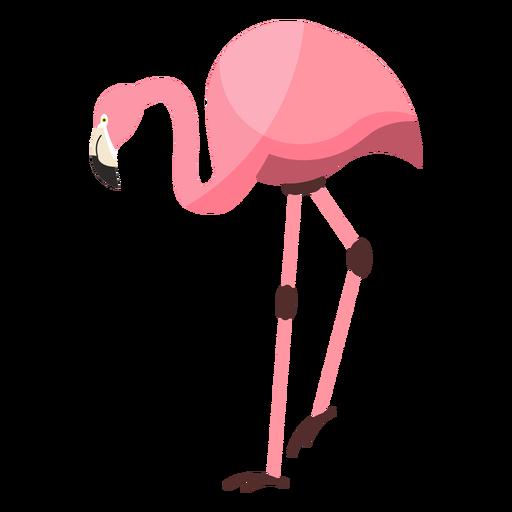 Flamingo pico de pata rosa plana