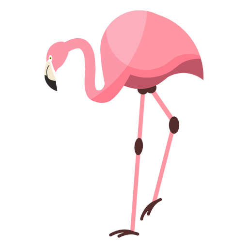 Flamingo-Rosa-Schnabelbein flach Transparent PNG
