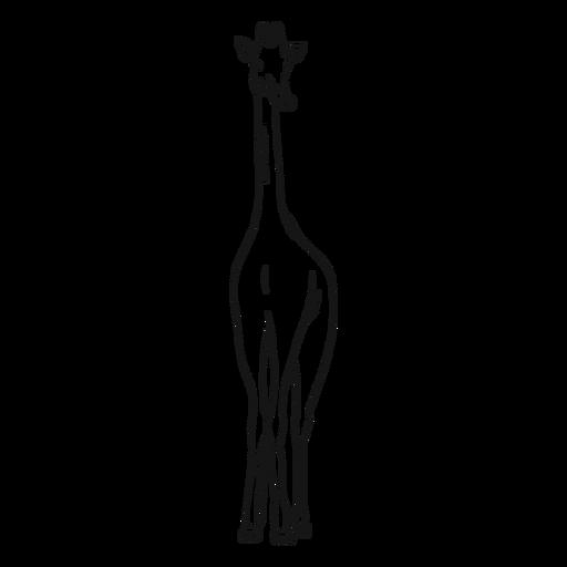 Esboço de ossicones longos de pescoço de girafa Transparent PNG