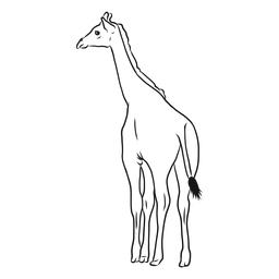 Giraffe neck tall long tail ossicones sketch