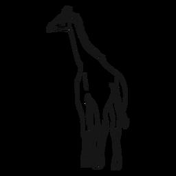 Ossicones-Skizze des langen langen Endstücks des Giraffenhalses
