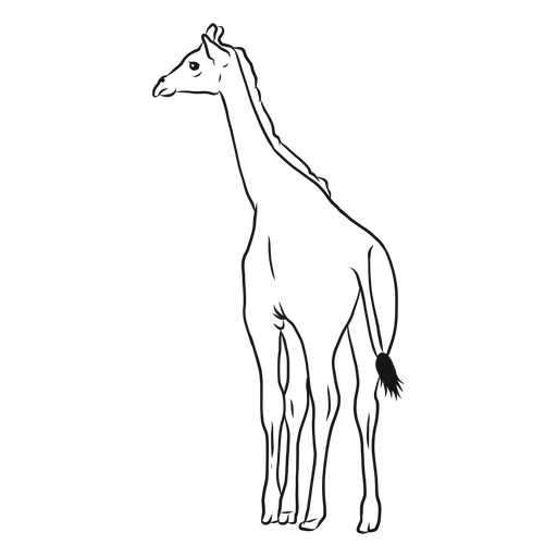 Giraffe neck tall long tail ossicones sketch Transparent PNG