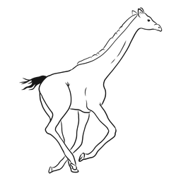 Girafa, pescoço, alto, longo, rabo, corrida, ossicones, esboço