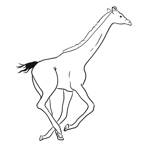 Giraffe neck tall long tail run ossicones sketch Transparent PNG