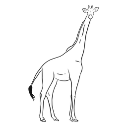 Giraffe tail neck tall long ossicones sketch