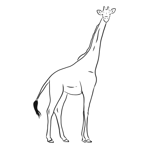 Giraffe tail neck tall long ossicones sketch Transparent PNG