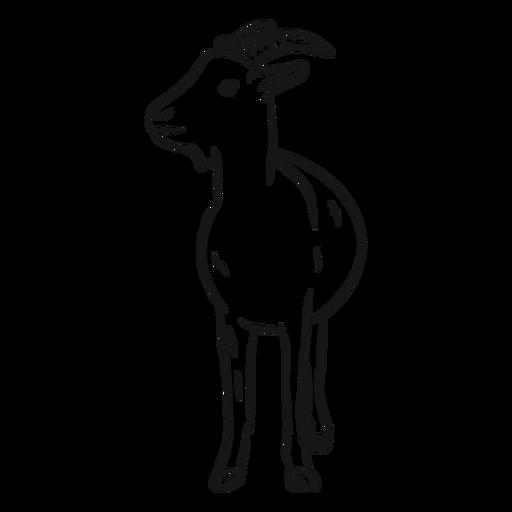 Dibujo de pezuña de cuerno de cabra
