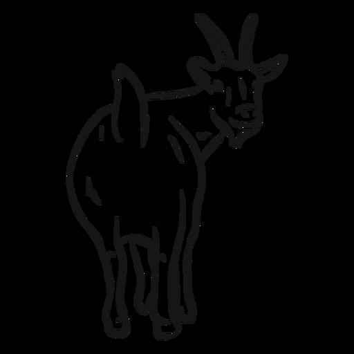 Boceto de pezu?a de cola de cuerno de cabra