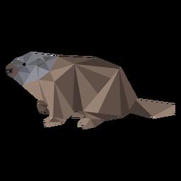 Hocico de marmota de cerdo molido bajo poli