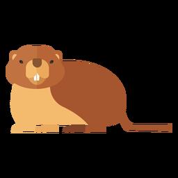 Margem de focinho de pele de porco marmota cauda plana