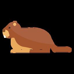 Ground hog marmot muzzle fur tail flat