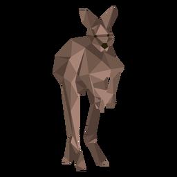Canguro oreja cola pierna salto bajo poli