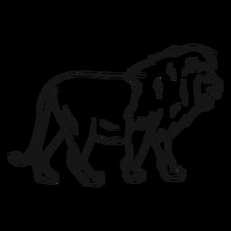 Bosquejo de cola de león rey melena