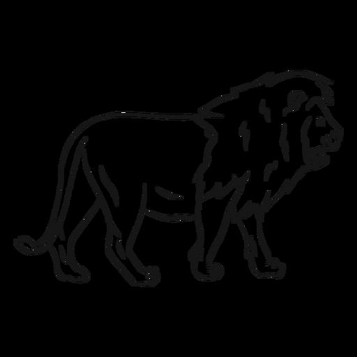 Lion king mane tail sketch Transparent PNG