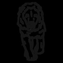 Bosquejo de león melena rey