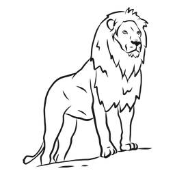 Bosquejo de cola de león