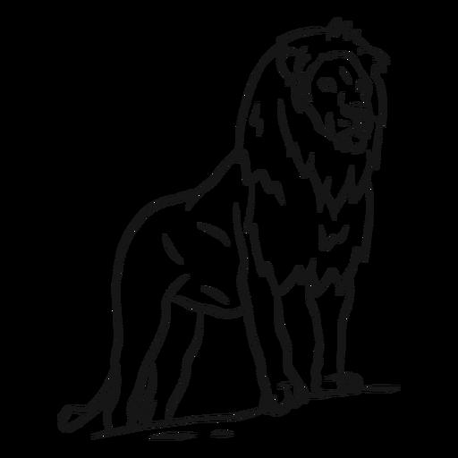 Bosquejo de cola de león Transparent PNG