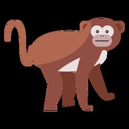 Mono bozal cola pierna plana