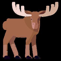 Moose elk antler flat