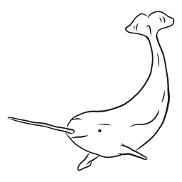 Narwhal Flipper Schwanzzahnskizze