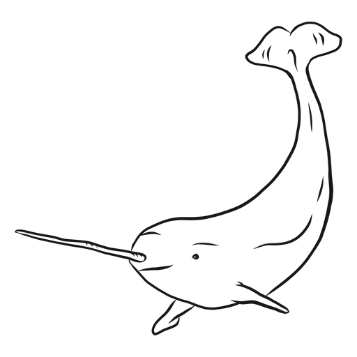 Narwhal flipper tail tusk sketch Transparent PNG