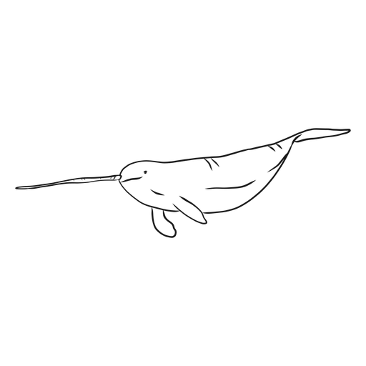 Narwhal flipper tusk tail sketch Transparent PNG
