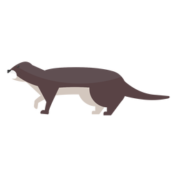 Lontra focinho cauda gordura plana
