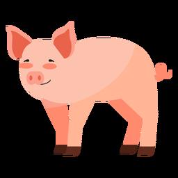 Schweineohr Schnauze Huffett flach