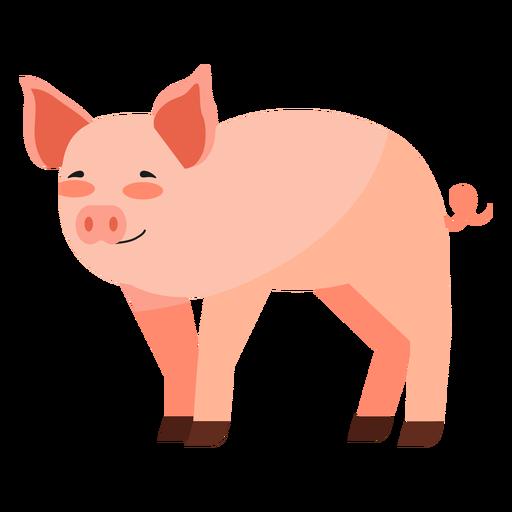 Oído de cerdo hocico pez gordo plano Transparent PNG