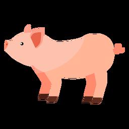 Ojo de hocico de cerdo con oreja plana