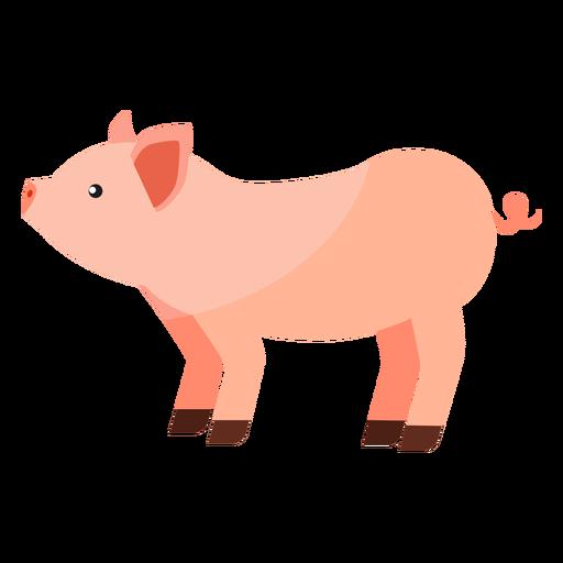 Ojo de hocico de cerdo con oreja plana Transparent PNG
