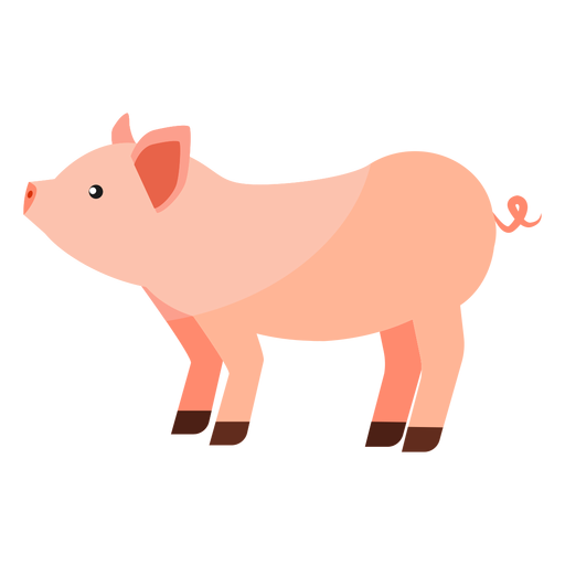 Pig snout hoof ear flat