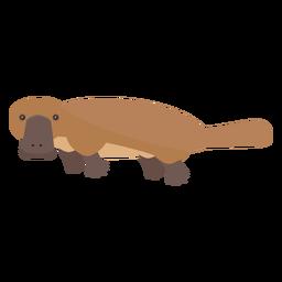 Platypus duckbill tail beak flat