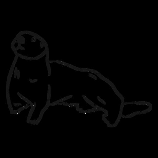 Dibujo de cola de hocico de nutria de mar Transparent PNG
