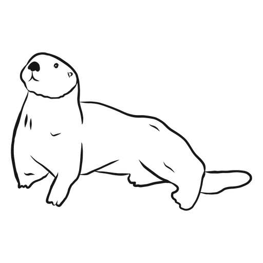Sea otter muzzle tail sketch Transparent PNG