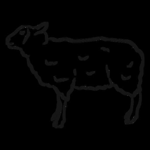Bosquejo de cordero de oveja lana cordero Transparent PNG
